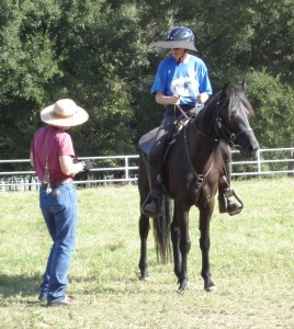 Working with noted gaited horse clinician Liz Graves.