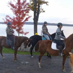 gaited-morgans-and-the-girls-640x480