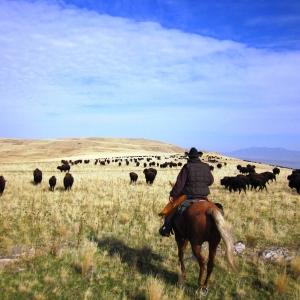 Brent-tailing-buffalo