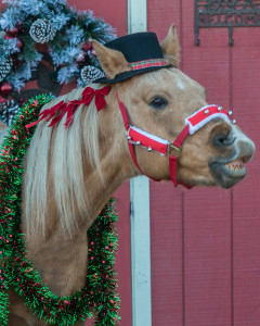 Merry Christmas from the Gaited Morgan Horse Organization!