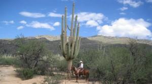 Dan by cactus