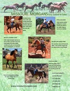 missouri morgans for website