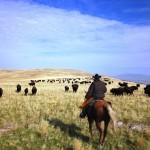 Brent tailing buffalo