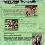 Missouri Morgans December 2012