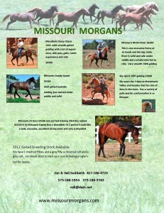Missouri Morgans for website March 2013