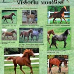 Missouri Morgans