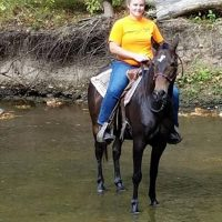 Gaited Mare 2007 find Erin on facebook email link is broke