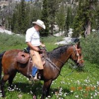 SOLD Fast and Smooth Trail Gelding